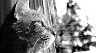 Chats noir & blanc